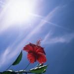 日焼け止めの落とし穴①~日焼け止めを塗っている間は日焼けしない?時間の罠~