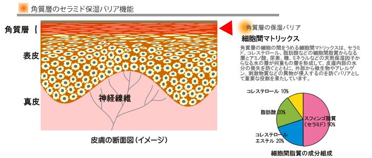 お肌のバリア機能のイメージ